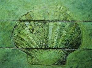 Gemaltes Bild einer Muschel.